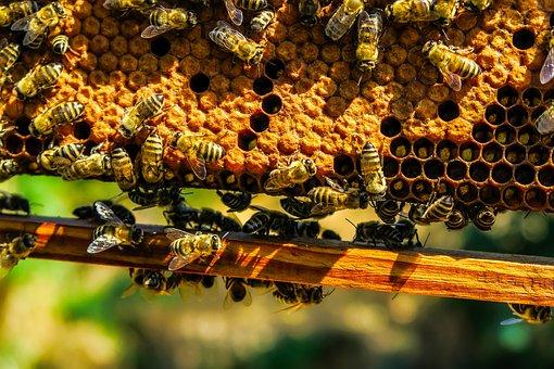 building-hive