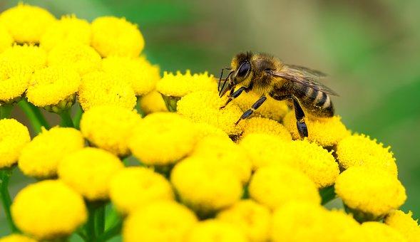 gathering-nectar